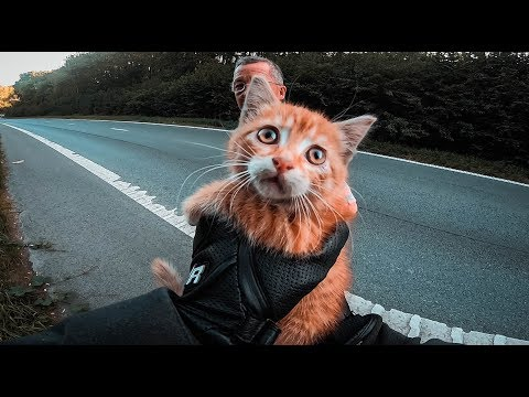 Pet Central - MOTORCYCLIST STOPS TRAFFIC TO SAVE CUTE KITTEN