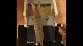 Как здорово (автоматизированный кошачий туалет)