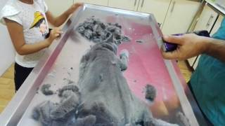 British Shorthair Kedi Tüy Kesimi