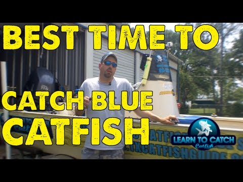 Catch and Cook: Can you EAT a Gafftopsail Catfish!!! from YouTube · High Definition · Duration:  9 minutes 51 seconds  · 6,000+ views · uploaded on 11/22/2016 · uploaded by Yak Motley