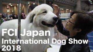 アランがFCI Japan International Dog Showに出場しました。結果は2G 4...