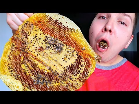 giant-raw-honeycomb-with-bees-•-mukbang