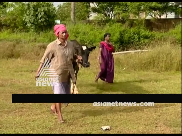 Relief camp for domestic animals and pets in pandalam