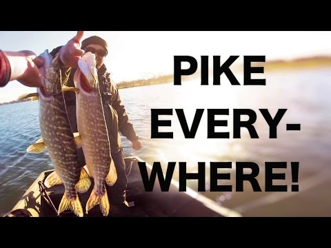 PIKE EVERYWHERE! Part 1 - Shallow water Lure fishing