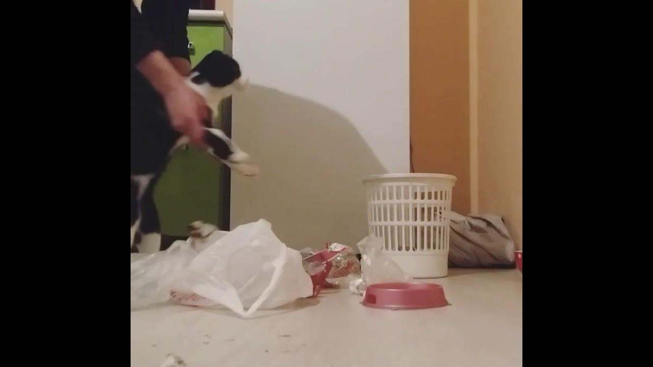 Кот преступление и наказание