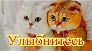 Смешное про животных|Приколы с котами| Видео про котов| Кошки|Позитив|Создай себе хорошее настроение