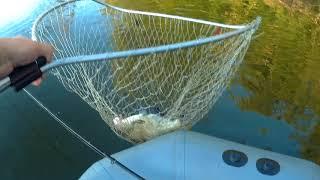 Такой рыбалки я ждал весь сезон. Мелочи нет. Ловля леща и подлещика на фидер