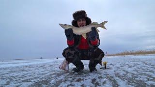 Первый лёд 2019-2020! Ловля щуки на жерлицы! Зимняя Рыбалка!