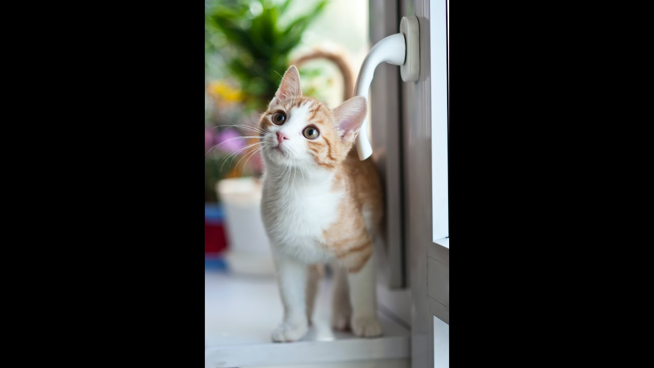 funny animals 2020 memes compilation-when your cat see something you don't see it - funny cat memes