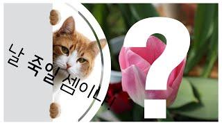 반려동물, 고양이 키우는 집에서 키우면 안 되는 식물