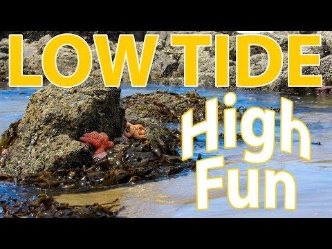 Tide Pools - Oregon Coast Pacific Ocean - Full Time RV Travel