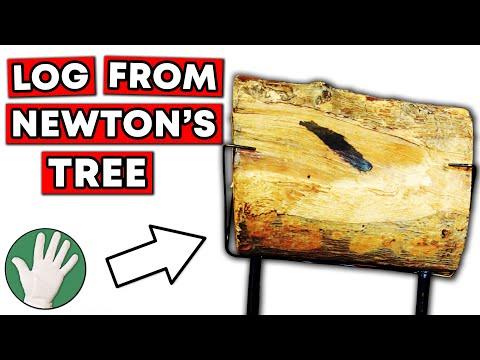 Log from Newton's Tree - Objectivity #122