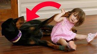 Köpeğin Küçük Kıza Ne Yaptığına Bakın - Annesi Görünce Gözlerine İnanamadı.