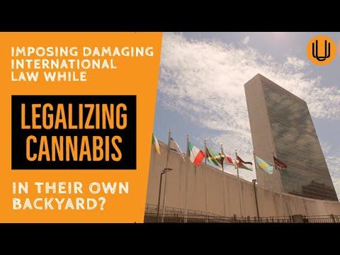 A Cannabis House of Cards