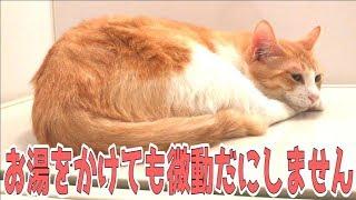 微動だにしないこの猫は一体… ・サブチャンネルの登録お願いします! ht...