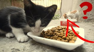 Cute kittens Eating Cat Food  l Adorable Cats - Adorable Kittens