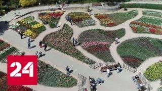 В Ялте в Никитском ботаническом саду расцвели 80 тысяч тюльпанов - Россия 24
