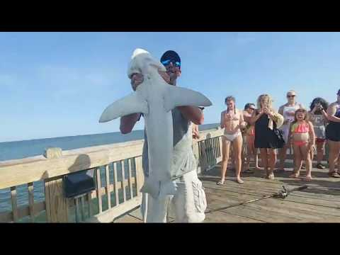 Amazing 5 Ft Shark Pulled Up On Tybee Island Fishing Pier!