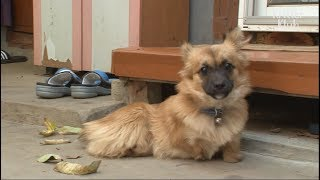 A Lovely Dog Born Without Legs Is Given Legs As A Gift | Kritter Klub