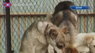 В Донецке создадут базу бродячих и домашних животных