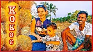 Рецепты индийской кухни. Острый соус чатни. О пользе кокоса и кокосового сока..