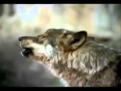 David Guetta ft.Sia - She Wolf (Cover Ariel Hill) - Legendado-português/inglêsиз YouTube · С высокой четкостью · Длительность: 3 мин38 с  · Просмотры: более 26.000 · отправлено: 16-7-2013 · кем отправлено: Poliglota Musical