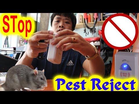 Sự kỳ lạ của - Thiết Bị Đuổi Côn Trùng - Đuổi Chuột/Review Thiết Bị Đuổi Côn Trùng Pest Reject