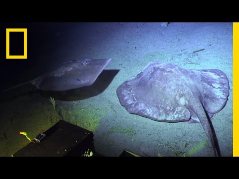 The World on the Ocean Floor | Sea of Hope: America's Underwater Treasures