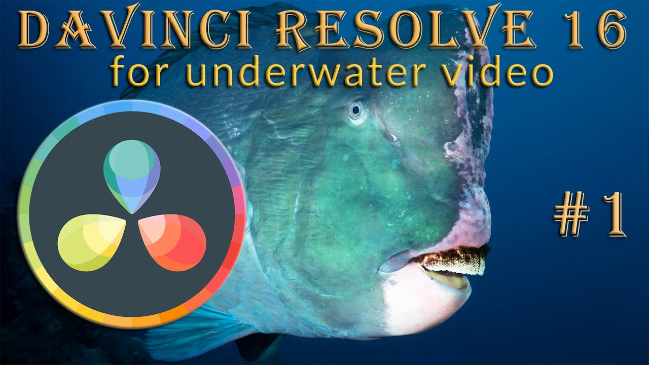 Davinci resolve 16 for underwater video . Part 1 :  Settings, Importing files and Bins