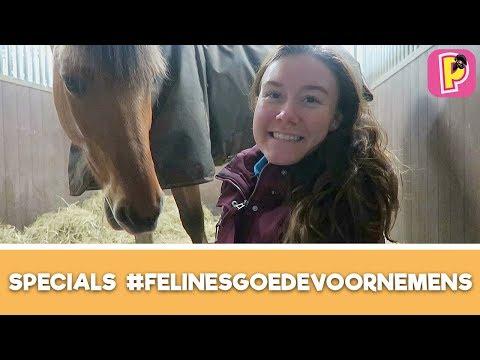 Goedevoornemens van Felinehoi - Q&A | SPECIALS | PennyTV