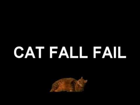 Ultimate cat fails