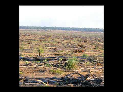 Queensland Landclearing radio ad