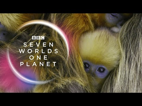 Seven Worlds, One Planet: Extended Trailer (ft Sia and Hans Zimmer)   New David Attenborough Series