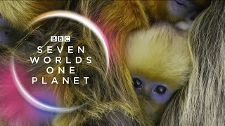 Seven_Worlds,_One_Planet:_Extended_Trailer_(ft_Sia_and_Hans_Zimmer)_|_New_David_Attenborough_Series