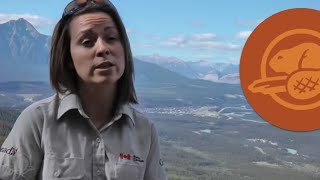 Keeping the Wild in Wildlife -- Canada