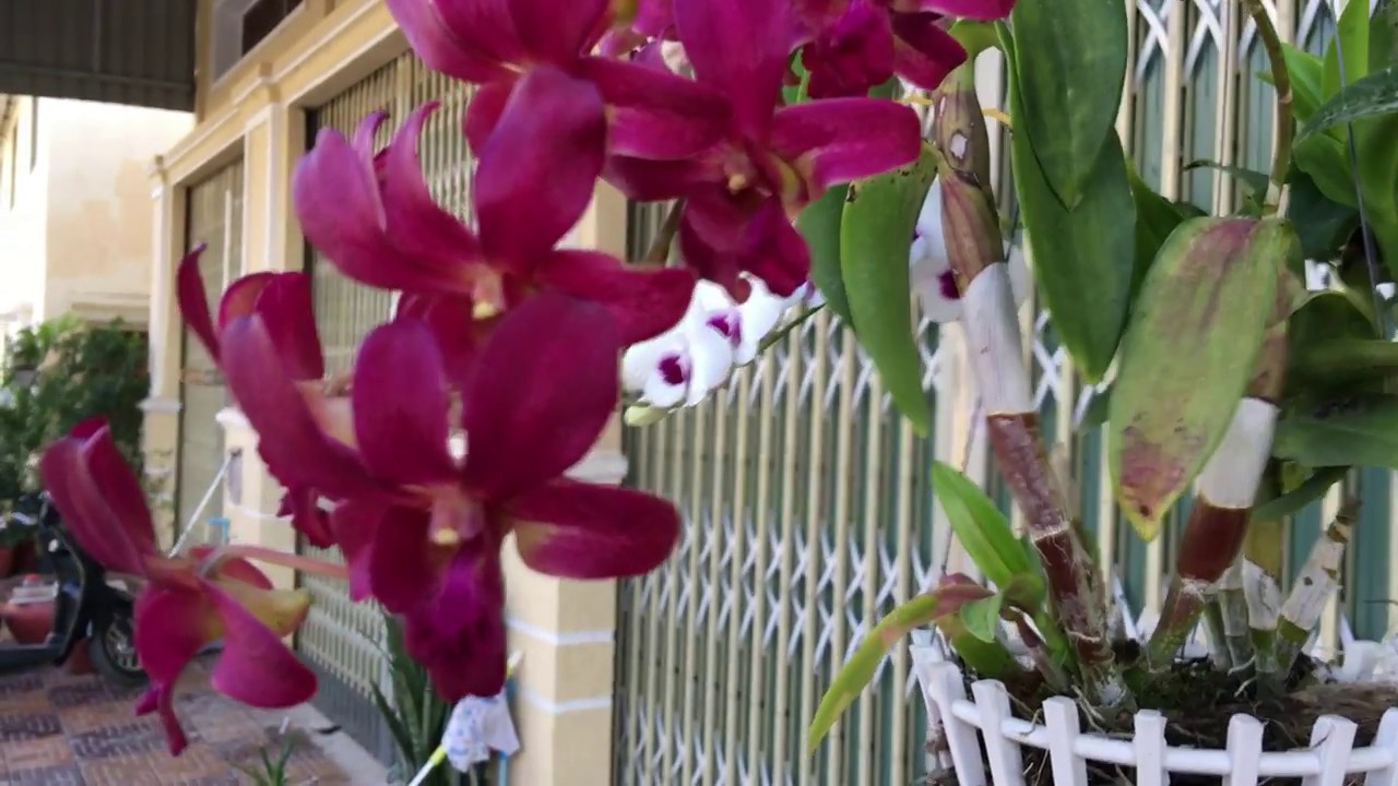 Most beautiful orchid flower in the world growing orchids in my most beautiful orchid flower in the world growing orchids in my home izmirmasajfo