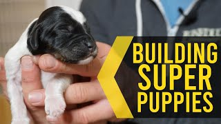 Early Neurological Stimulation In Puppies