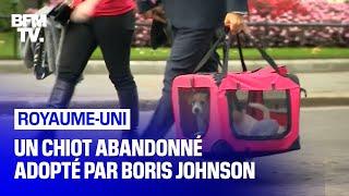 Un chiot abandonné adopté par Boris Johnson arrive au 10 Downing Street