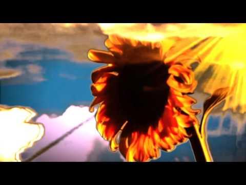 Sunflower Screen Saver