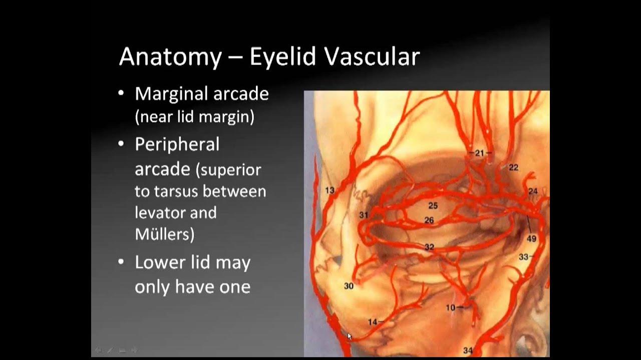 Oculoplasty and Orbit: Anatomy - YouTube