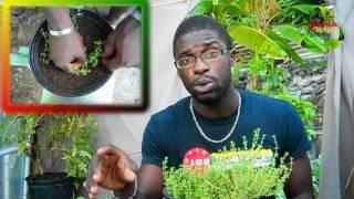 How to grow thyme | The Kitchen Garden