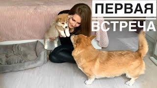 ЗНАКОМИМ наших собак РЕВНОСТЬ Таффи В ШОКЕ L его реакция