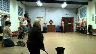 Mansfield Dog Training
