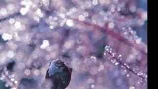 Delerium feat Leigh Nash - Innocente