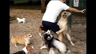 Brave Owners Protecting Their Dogs!!! thumbnail