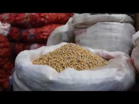 Happy Agri in Golden Land (Episode 10 - Green Gram)
