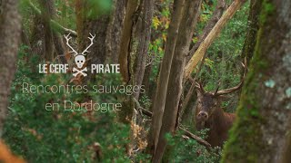 Le Cerf Pirate - Rencontres sauvages en Dordogne #1
