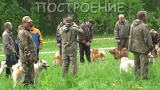 Городская Выставка охотничьих собак Сыктывкар 2017