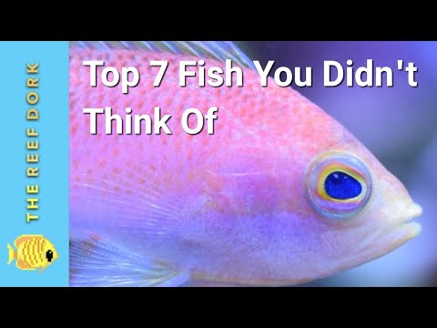 Top 7 Saltwater Fish You Didn't Think Of