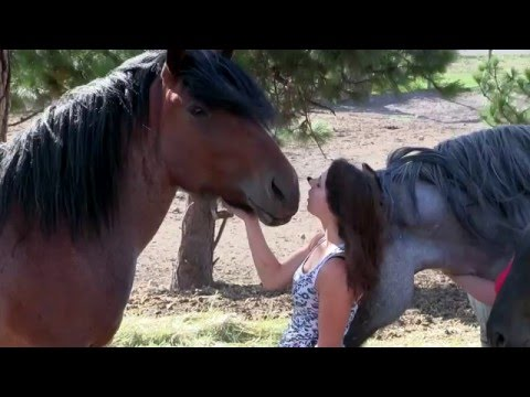 Save the Horses by Humane Farming Association from YouTube · Duration:  6 minutes 26 seconds
